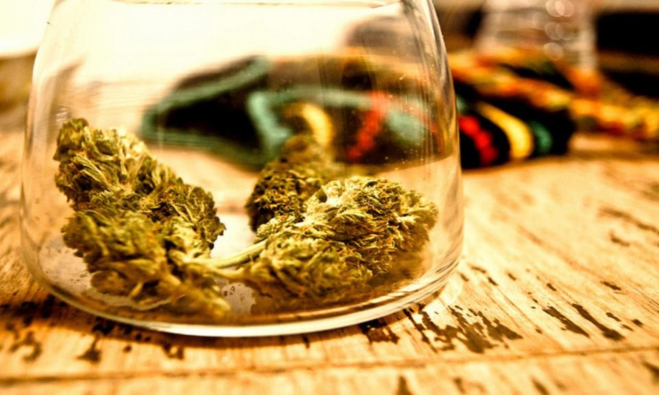 Buds of the Future: An American's Peek into Amsterdam's Coffeeshop Culture (Part 2)