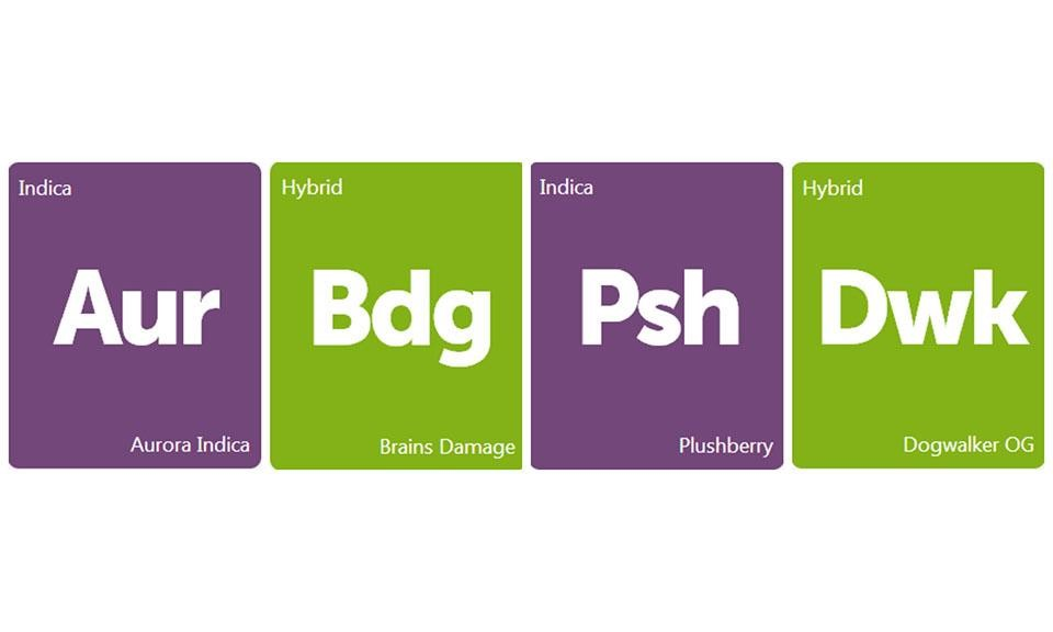 New Strains Alert: Plushberry, Dogwalker OG, Aurora Indica, and Brains Damage
