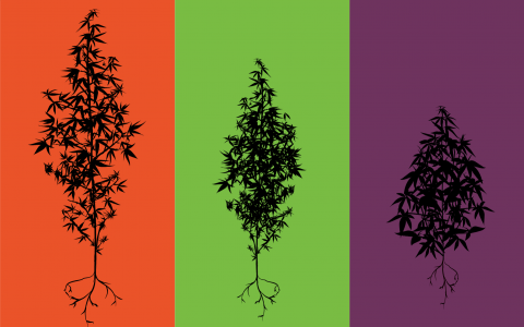 What Are Cannabis Terpenes and What Do They Do?   Leafly