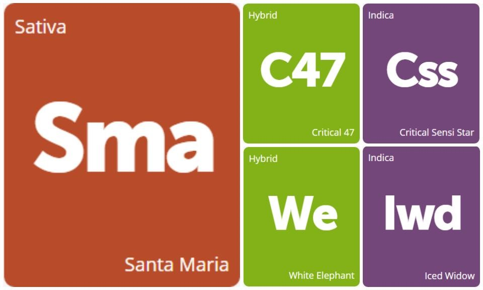 New Strains Alert: Santa Maria, White Elephant, Critical Sensi Star, Critical 47, and Iced Widow