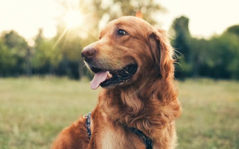 Can Pets Get High Off Secondhand Cannabis Smoke?