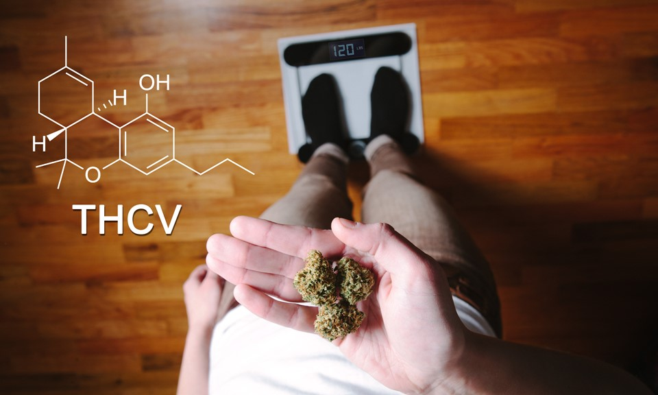 What Is THCV and What Are the Benefits of This Cannabinoid?