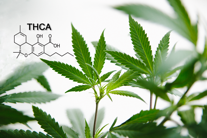 What Is THCA & What Are the Benefits of This Cannabinoid