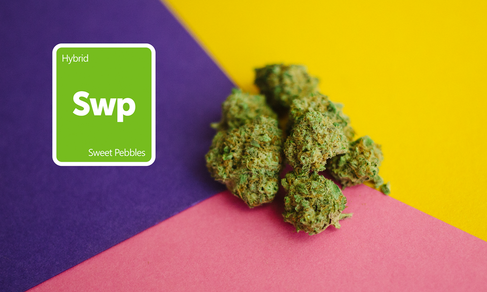 New Strains Alert: Sweet Pebbles, Blue Wreck, Scott's OG, CBD Mango Haze, and More