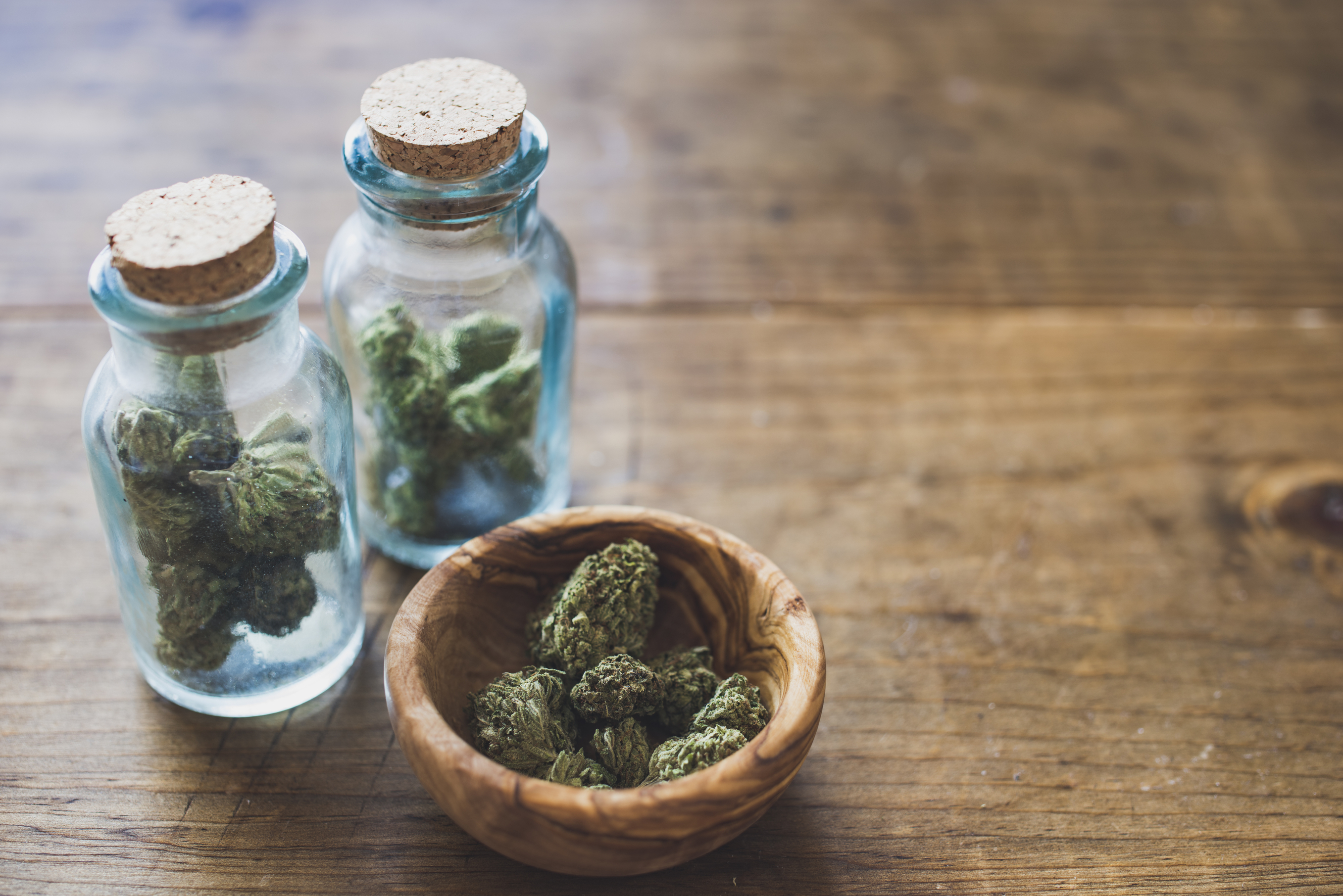 Top Cannabis Education Centers Where To Go When You Want To Know