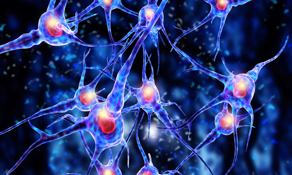Oxytocin Found To Stimulate Social >> How Does Your Endocannabinoid System Impact Your Brain S