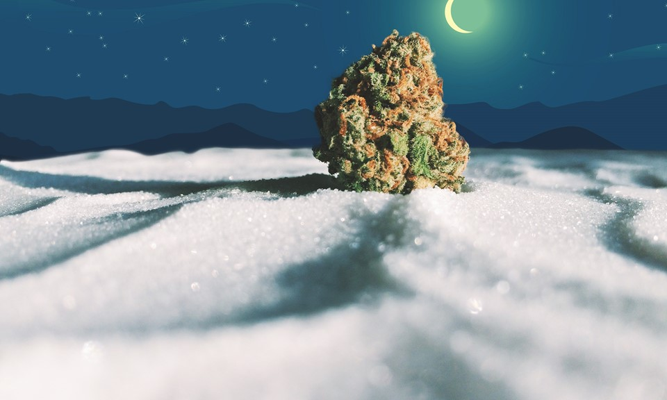 The Best Cannabis Strains for the Holidays (According to
