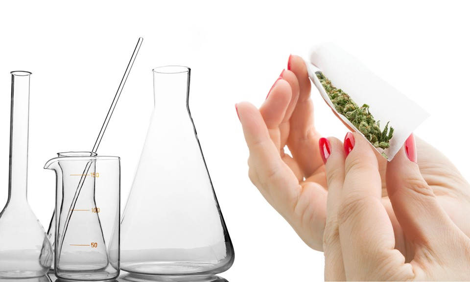 How to get a job related to cannabis (as a chemist)?