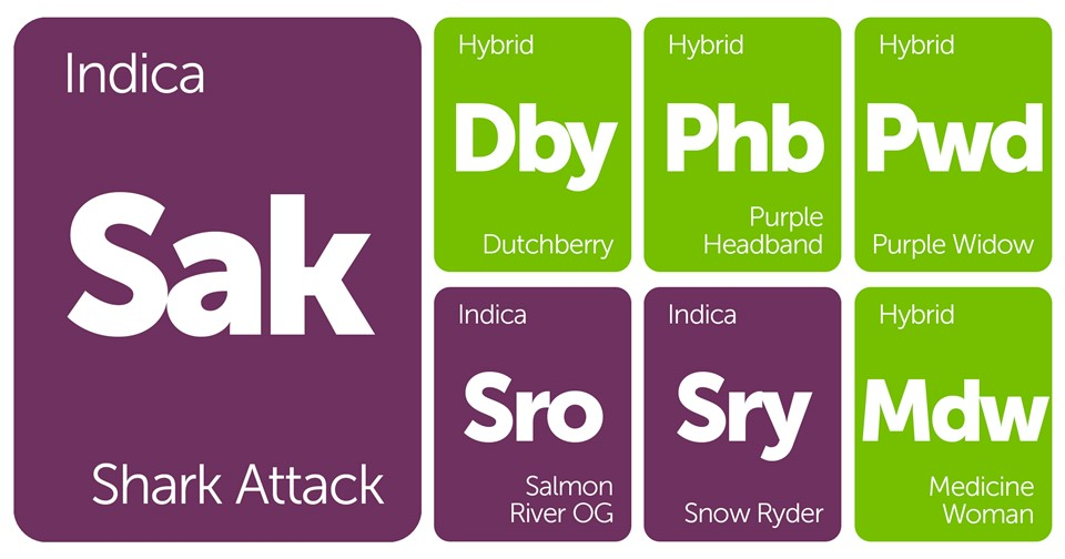 New Strains Alert: Purple Widow, Medicine Woman, Shark Attack, Purple Headband, and More