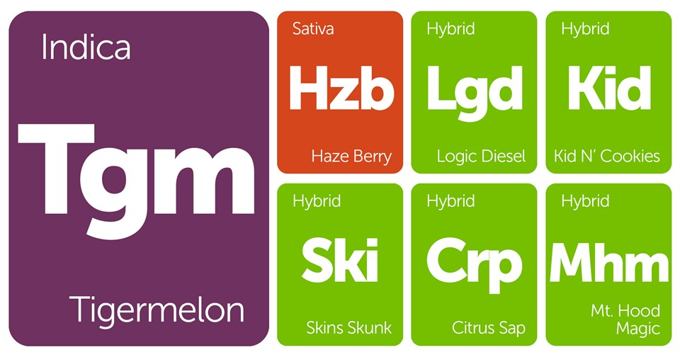 New Strains Alert: Tigermelon, Mt. Hood Magic, Kid N' Cookies, Logic Diesel, and More