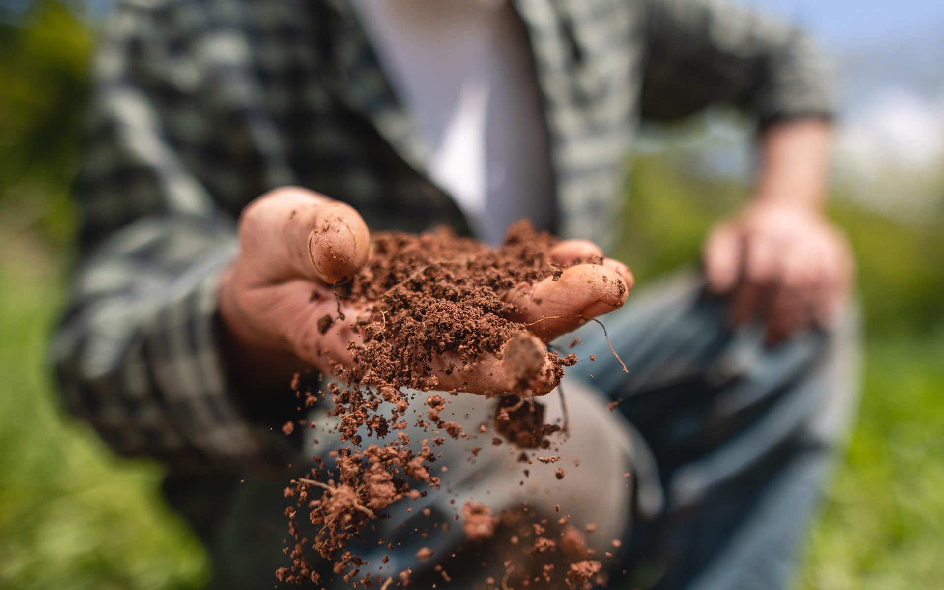 marijuana growing, how to grow marijuana, seeds, clones, cannabis