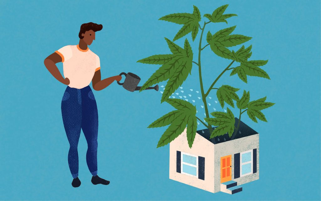 how-to-grow-cannabis-indoors-beginners-guide