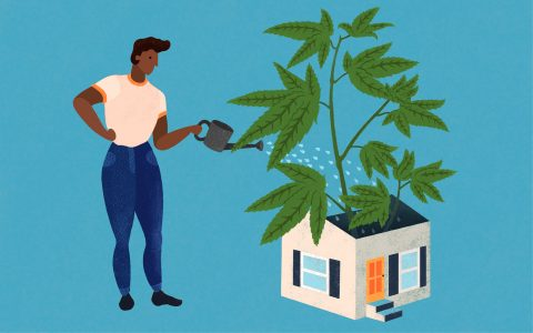 How to Build A Cannabis Garden for $100, $500, & $1000 | Leafly