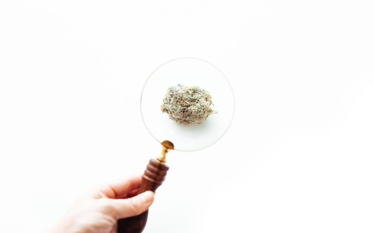 Cannabis vs. Marijuana vs. Weed Search Trends
