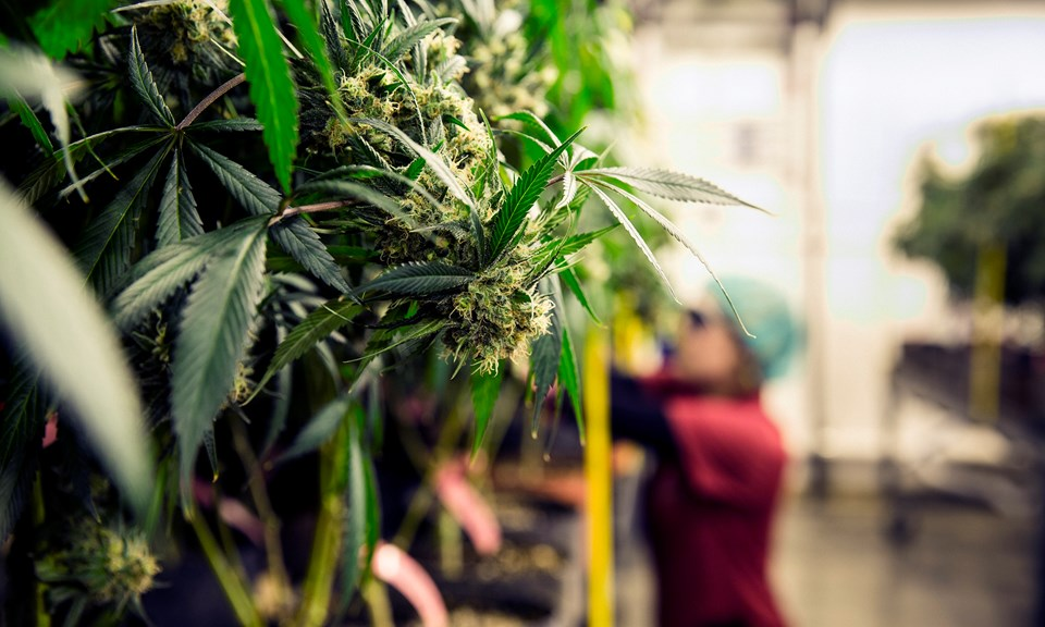 Targeting Cannabis, Czech Republic Takes Aim at… Gardening Stores ...