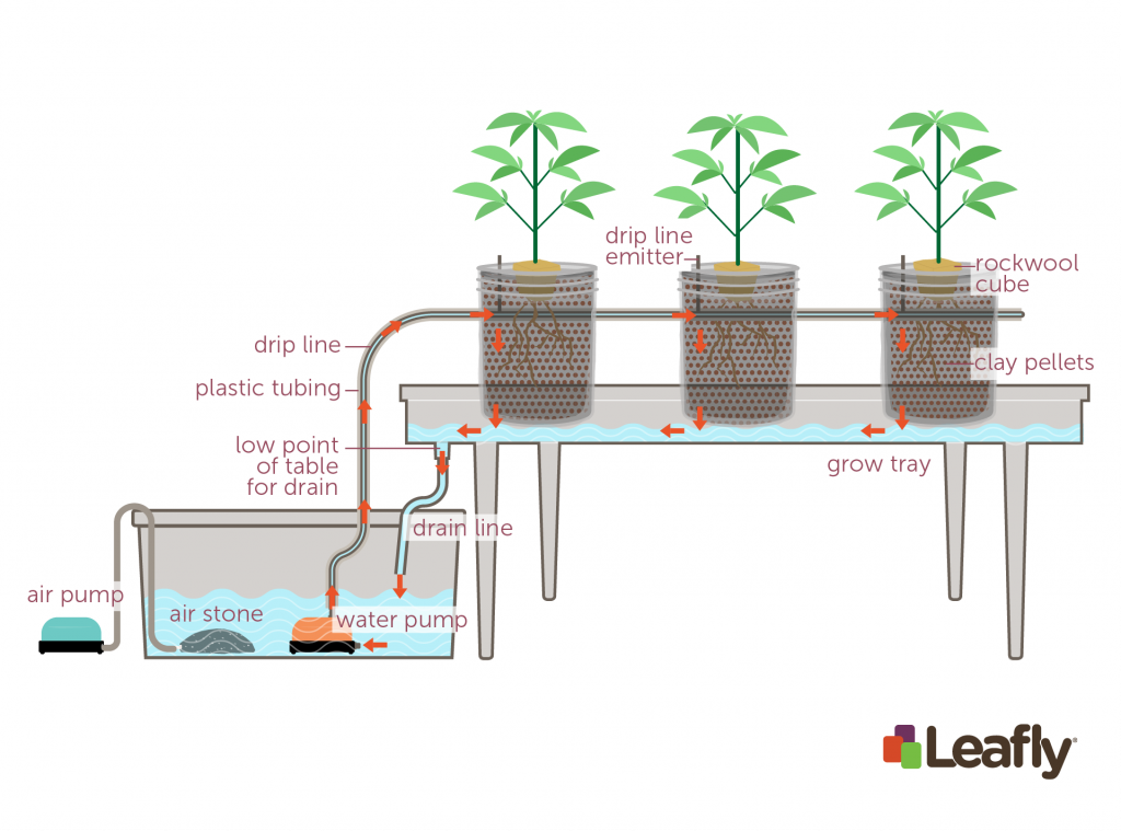 How to Use Hydroponic Growing Systems for Marijuana | Leafly