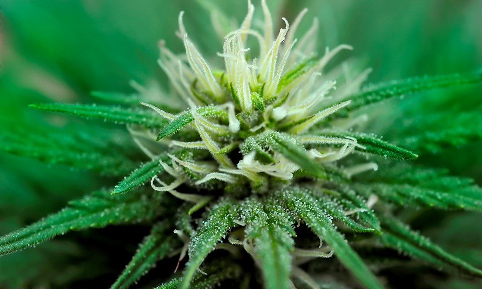 How to Use CO2 to Increase Yields in Your Marijuana Grow