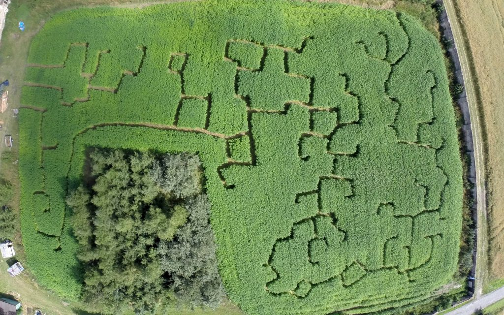 An aerial view of the farm's most distinctive feature: a two-acre hemp labyrinth. Photo via Lukas Hurt