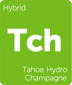 Leafly Tahoe Hydro Champagne hybrid cannabis strain tile