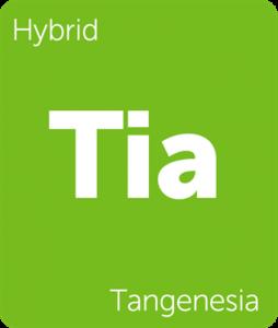 Leafly Tangenesia hybrid cannabis strain tile
