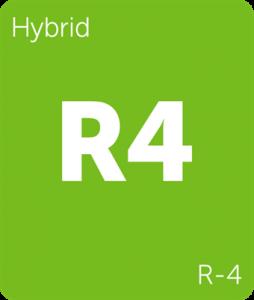 Leafly R-4 hybrid cannabis strain