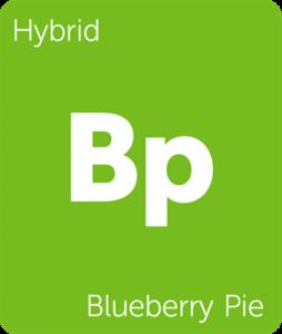 Leafly Blueberry Pie hybrid cannabis strain