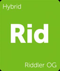 Leafly Riddler OG hybrid cannabis strain
