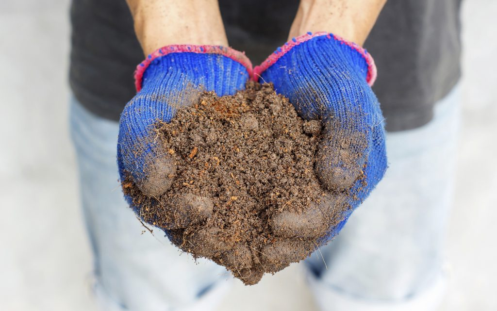 Man hold a soil in his hands.
