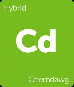 Leafly Chemdawg hybrid cannabis strain