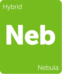 Leafly Nebula hybrid cannabis strain