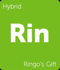 Leafly Ringo's Gift hybrid cannabis strain