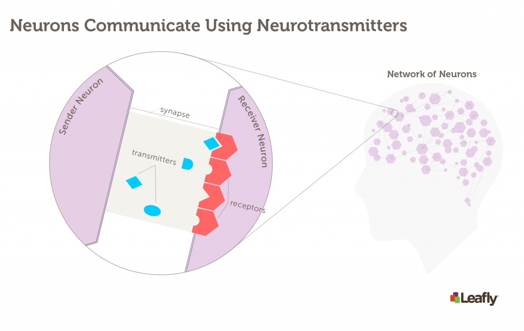how neurons in the brain communicate