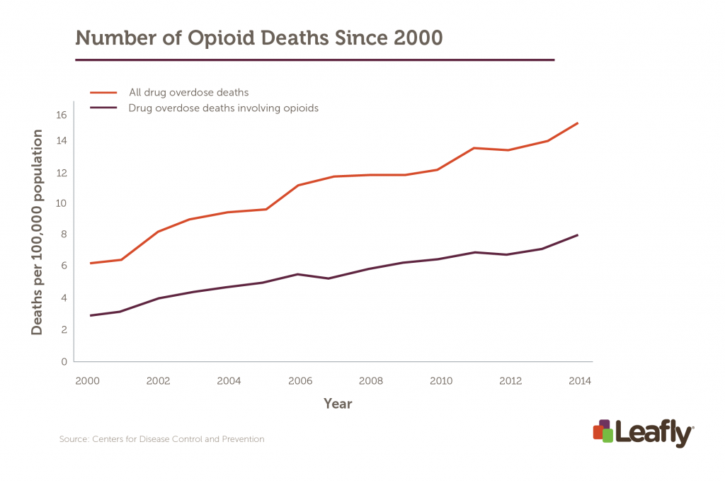 Opioids make up an enormous percentage of total drug overdoses in the U.S.