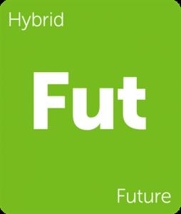 Leafly Future hybrid cannabis strain