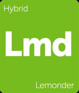 Leafly Lemonder hybrid cannabis strain