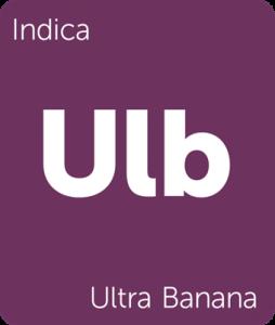 Leafly Ultra Banana indica cannabis strain