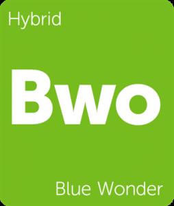 Leafly Blue Wonder hybrid cannabis strain
