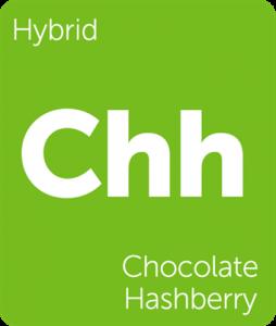 Leafly Chocolate Hashberry hybrid cannabis strain
