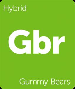 Leafly Gummy Bears hybrid cannabis strain