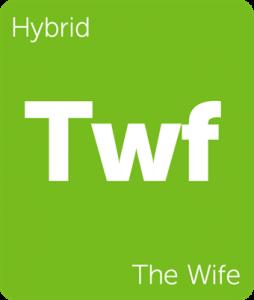 Leafly The Wife hybrid cannabis strain