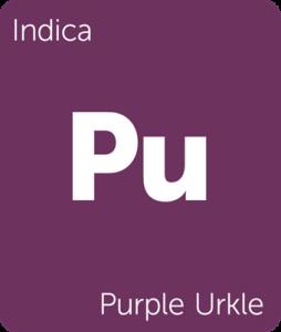 Leafly Purple Urkle indica cannabis strain