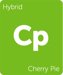 Leafly Cherry Pie hybrid cannabis strain