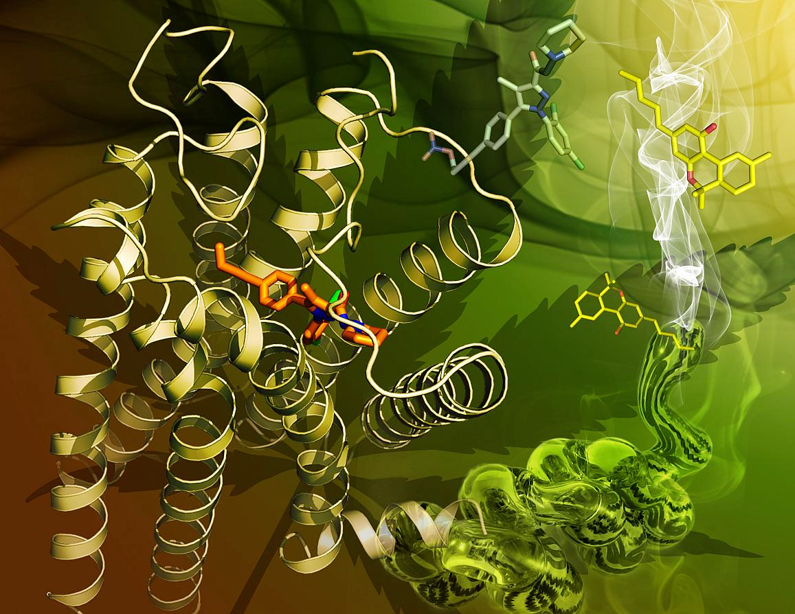 Crystal structure of the human CB1 receptor