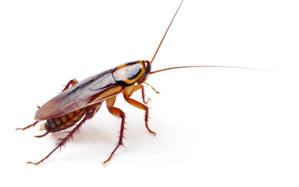 Did You Know a Version of 'La Cucaracha' References Marijuana?