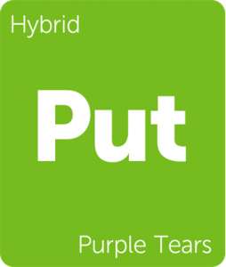 Leafly Purple Tears hybrid cannabis strain