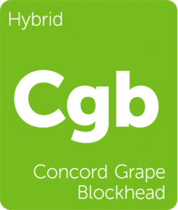 Leafly Concord Grape Blockhead hybrid cannabis strain