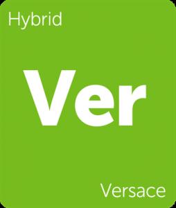 Leafly Versace hybrid cannabis strain tile
