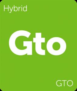 Leafly GTO hybrid cannabis strain tile