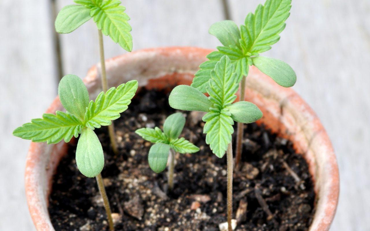 California Prop 64 | Recreational Marijuana Laws ... - YouTube
