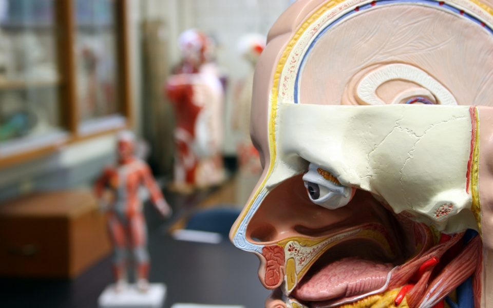 Human Body Anatomical Model